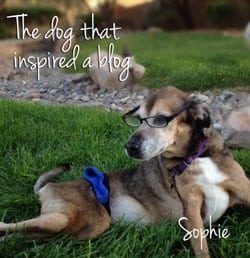 Lessons from a Paralyzed Dog Founder, Sophie