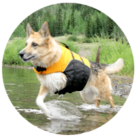 best three legged dog products