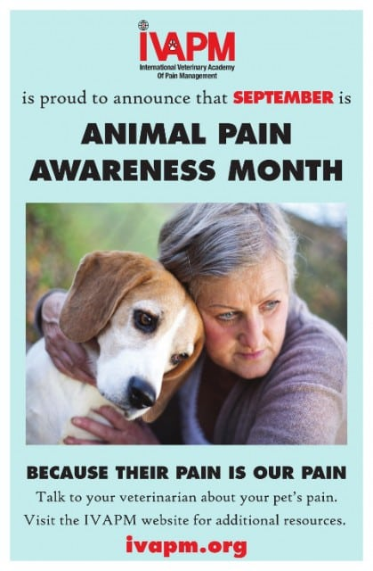 tripawd pain control
