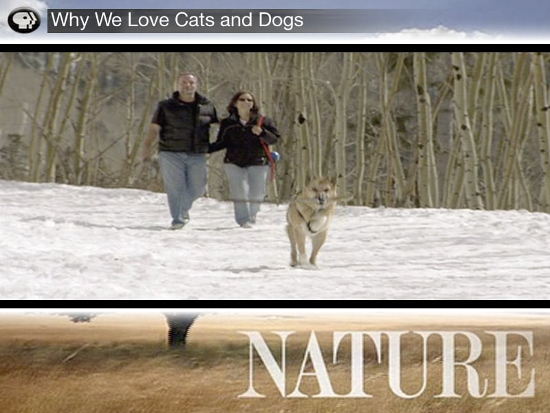 Scene from Why We Love Cats and Dogs