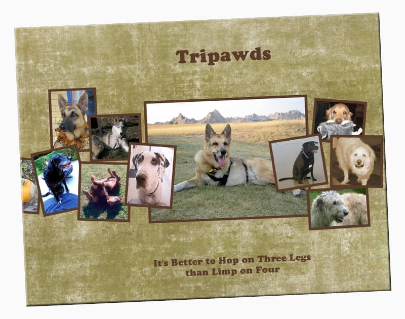 Jerry's Book of Tripawds