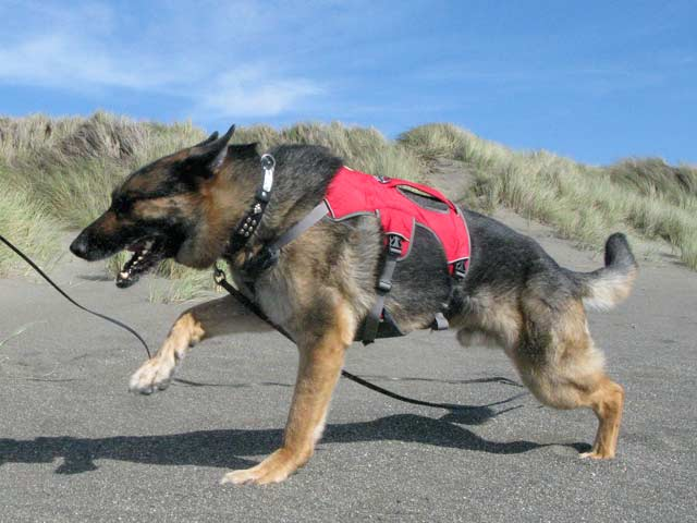 Tripawd approved dog harnesses