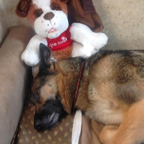 Wyatt Snuggles One Cure Dog