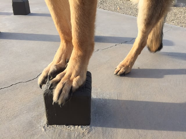 Tripawd, core-strengthening, exercise