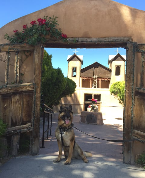 German Shepherd, Wyatt, Tripawd, New Mexico, Chimayo