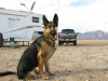 Wyatt Ray Boondocking Dawg at Anza Borrego