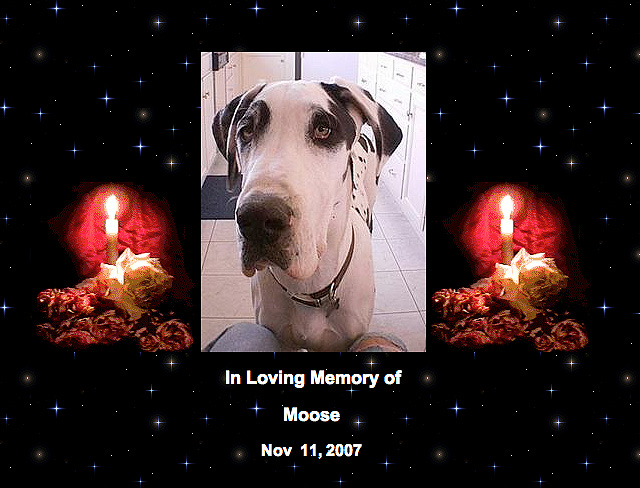 Rest In Peace Moose
