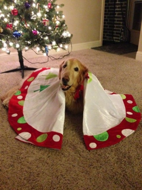 best Tripawd gifts