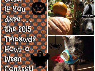 Tripawd dog cat contest