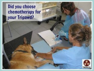 pet cancer chemotherapy regrets