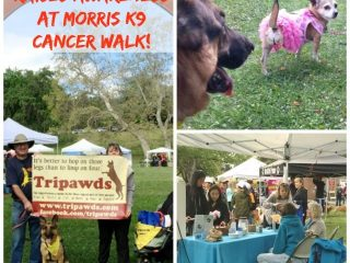 Team Tripawds canine cancer research