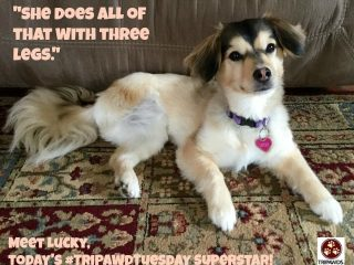 Tripawd Tuesday Lucky