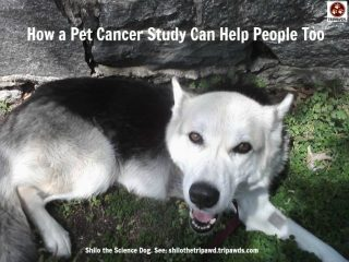 pet cancer study