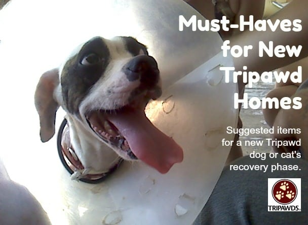 Tripawds recovery shopping list