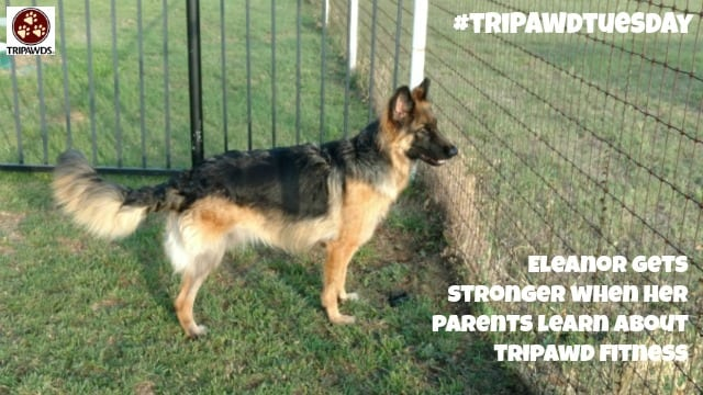 exercise for Tripawds