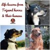 life lessons from tripawd heroes