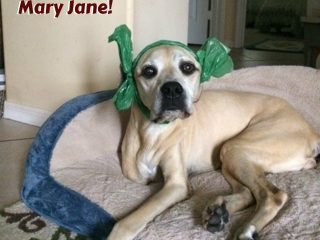 Tripawd Tuesday marvelous Mary Jane
