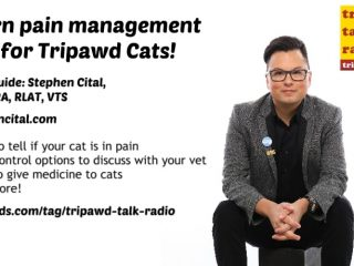 Tripawd Cats Pain Management