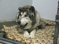VCA L.A. Oncology Vet Patient Reno