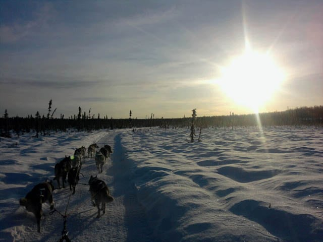 Musher Dogs Rule
