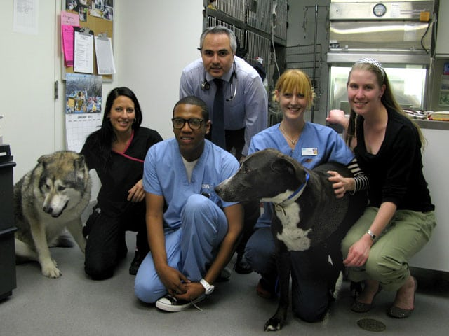 VCA L.A. Oncology Vet Dept. Staff