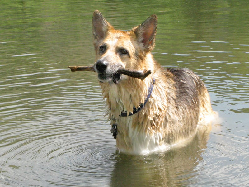 Posing with a stick at Vickers Ranch Pond