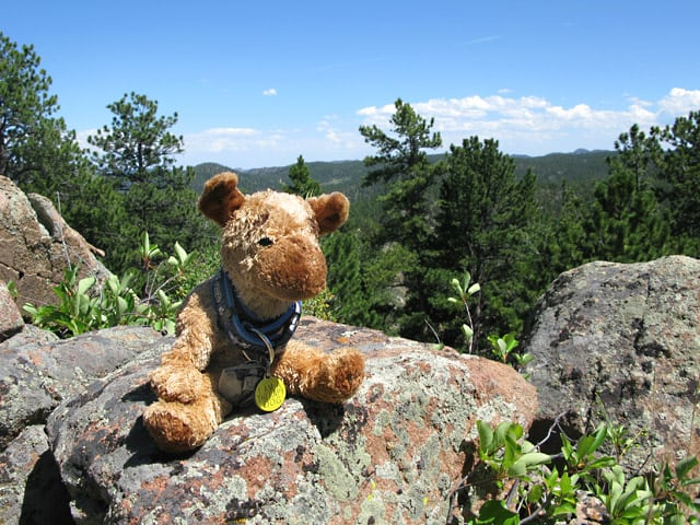 Spirit Jerry enjoys his new mountain home.