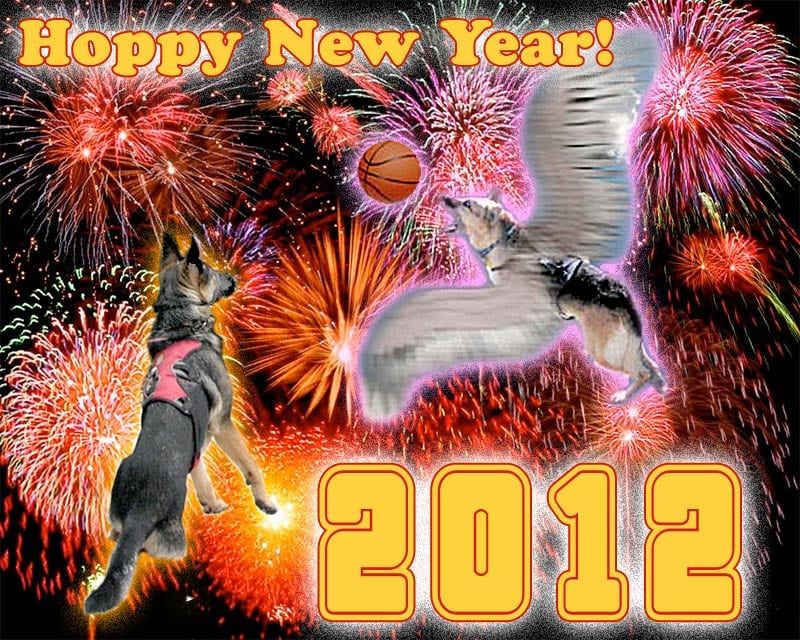 Hoppy New Year from Tripawds!