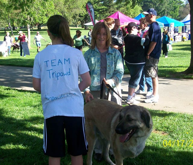 Team Tripawd at the K9K Walk