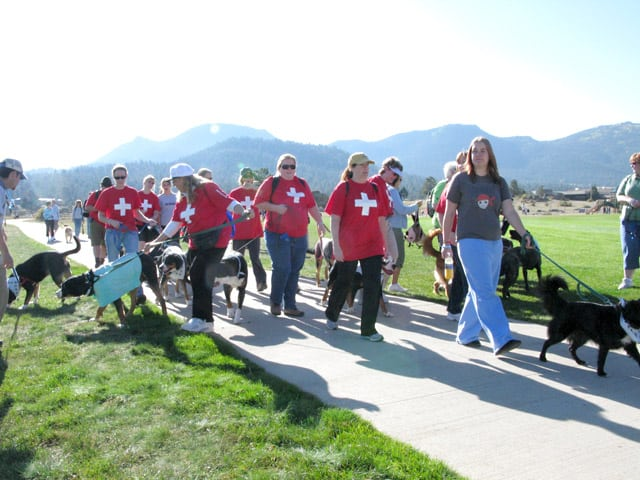 Team Swissies at K9K Walk Estes Park, CO