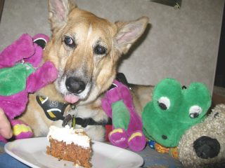 birthday-cake-for-ten-year-old-cancer-dog-jerry