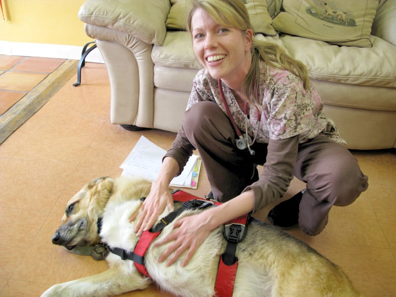 Dr. Mullins examines dog at Veterinary Cancer Care in Santa Fe
