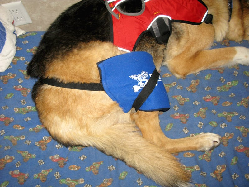 How to Apply Hot Cold Pain Pack On Dog With ACL Tear