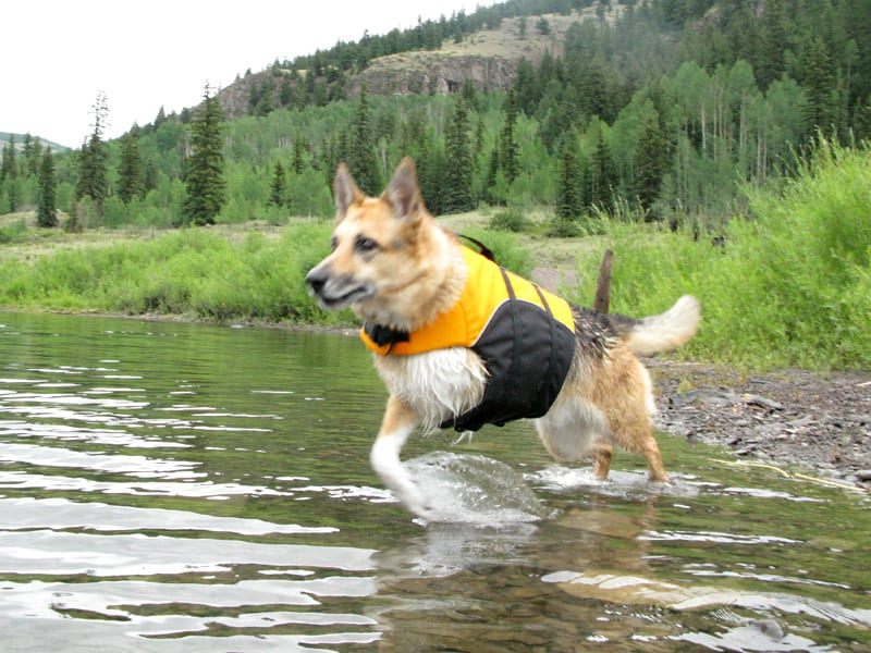 Jerry Swims Lake San Cristobal in Ruff Wear Float Coat