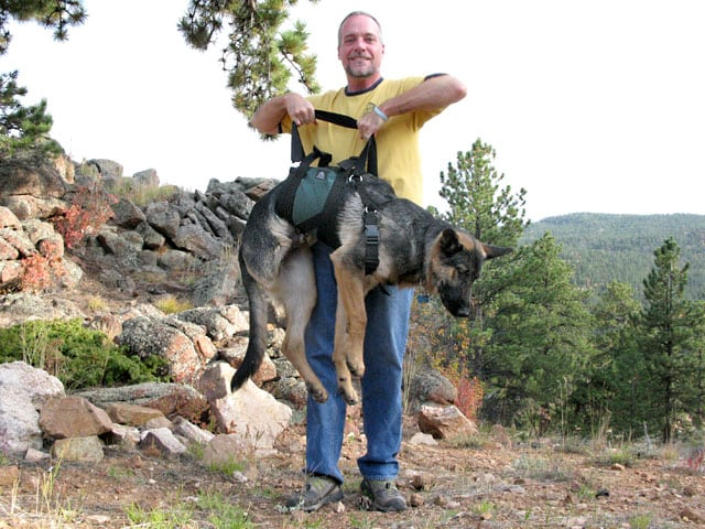 Easy Ways To Make A Weight Vest For A Dog