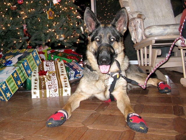 Tripawds Gear 187 Help Three Legged Dogs Ruffwear Dog Boots