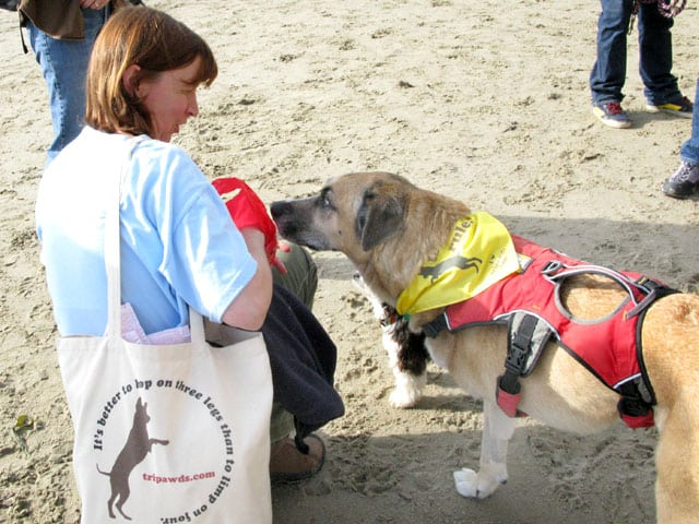 Tripawds Canvas Tote Bag helps support Tripawds Blogs Community