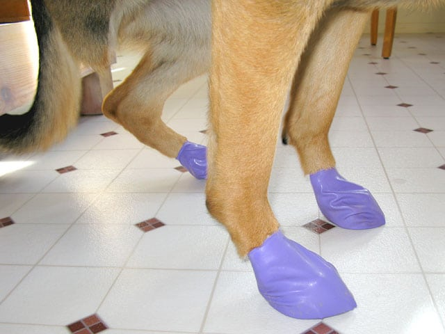 Pawz Traction Boots Protect Tripawd Feet
