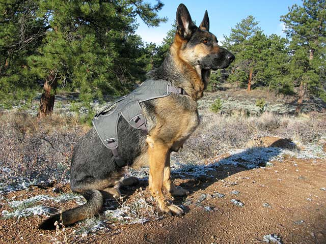 Tripawds Gear » Ruffwear Web Master Harness Review Demo
