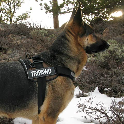 Tripawd, convert, harness, three-legged, dog, amputee, gear