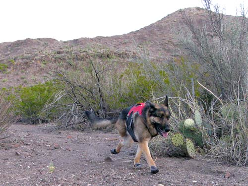 three-legged, dog, Ruffwear, boots, Grip Trex, amputee, tripawd, tripod