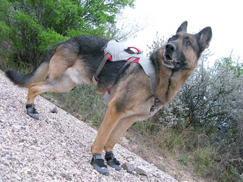 harness for tripawd dogs