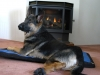 Wyatt on Ruff Wear Flop House Dog Bed by the Fire