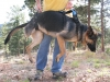 Support rear and front Tripawd dogs with Help Em Up Harness