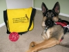 Wyatt with Tripawds Bike Messenger Bag