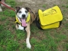 Trouble poses with Tripawds Bike Messenger bag