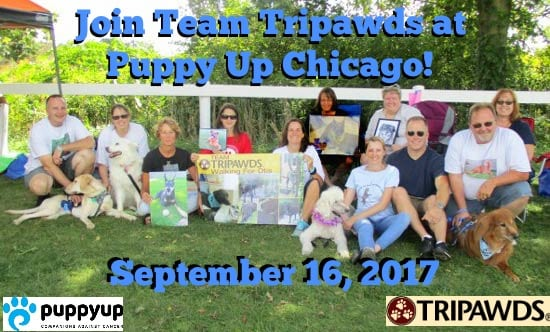 Tripawds PuppyUp Chicago