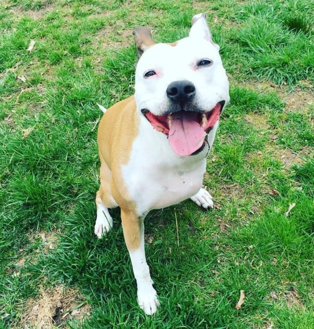 Tripawd Pit Rescue Lilly