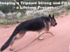 Tripawd Wyatt Runs in Colorado
