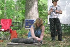 Greyhounds Rock Acupuncture Demonstration